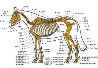 馬体診断予想.jpg